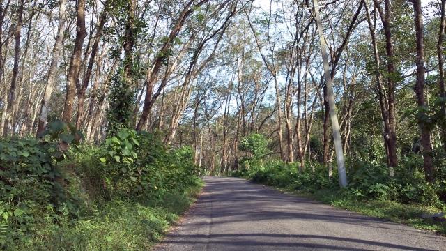greenroads1