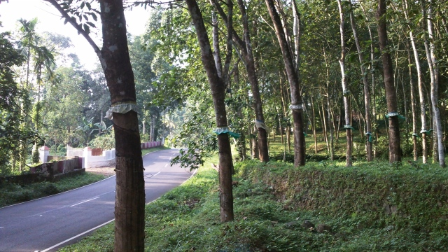 greenroads8